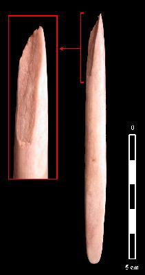 Fracture d'impact sur pointe osseuse expérimentale