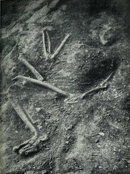 squelette-ferrasie-CP-CNRS.jpg